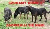 Psy_do_adopcji